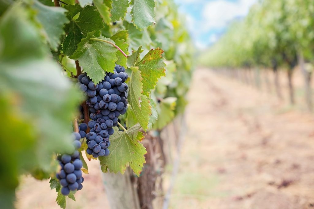 Recommended Reads: Investing In Wine